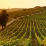 Biking through the Tuscan vineyards