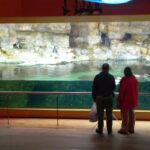 Oceanographic museum Valencia